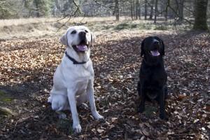 Tijdens de laatste bos wandeling met Olke kwamen we haar broer Oran tegen.