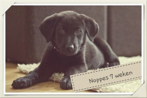 Noppes 7 wkn
