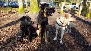 Evy, Olix en Badu maart 2016