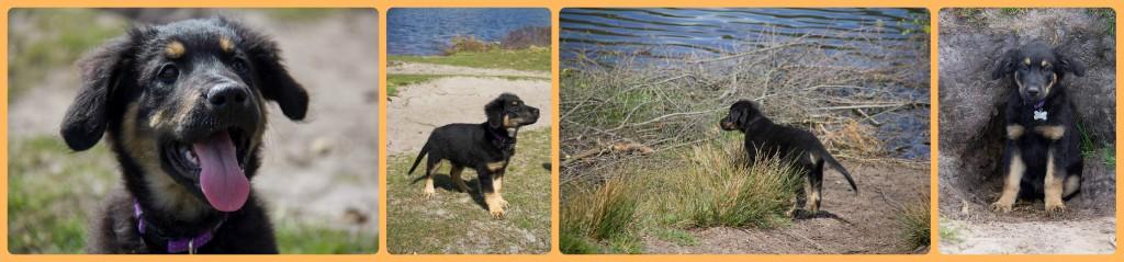 Olix 3 maanden oud 1 mei 2015