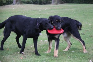 Olix en Clyde, voor de laatste keer lekker samen spelen.