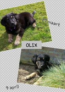 Olix 9 weken