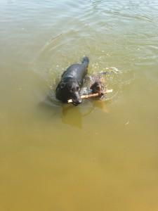Noppes nog met zijn vriendje Sam in het water.
